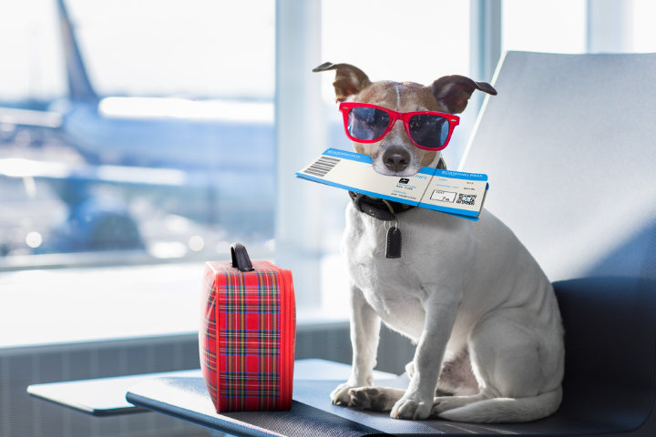The Best Pet Travel Airlines Of 2020